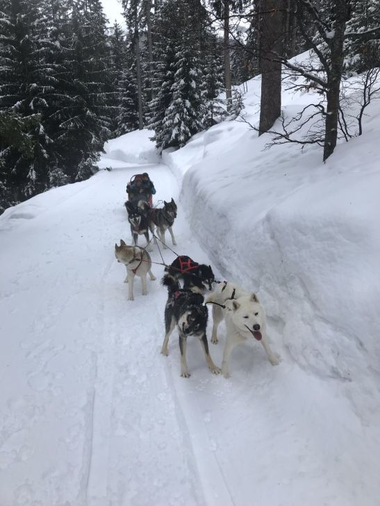 Fahrenheit 7 Courchevel: Top things to do in Courchevel dog sledging