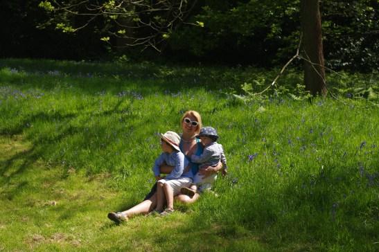 Bluebells at Claremont Gardens