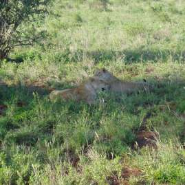 Tsavo East safari