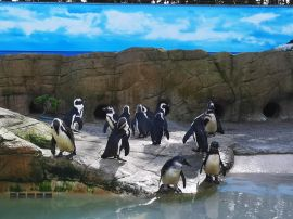 PWP Penguins