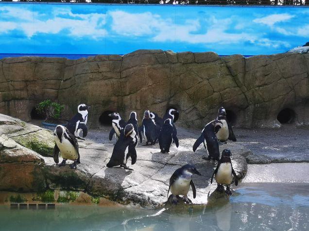 PWP Penguins