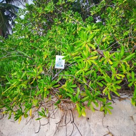 Turtle nest Anse Intendance Mahe island Seychelles