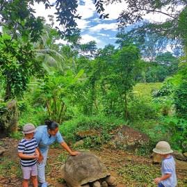 Feeding tortoises - Banyan Tree Conservation Centre