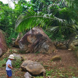 Banyan Tree Seychelles tortoises at conservation centre