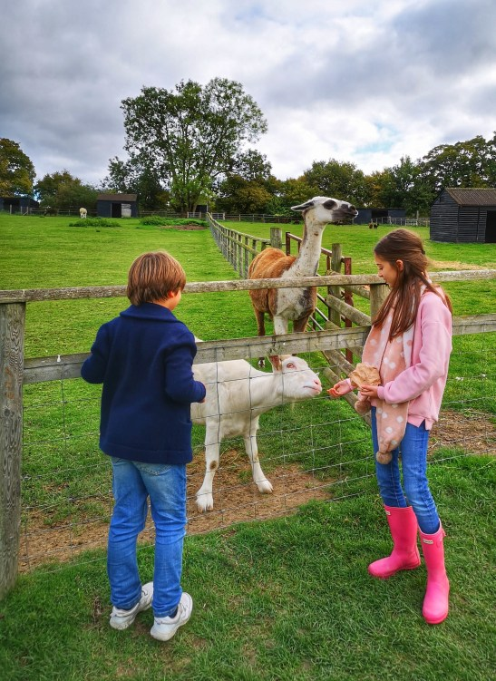 days out in Surrey with Bocketts Farm Park