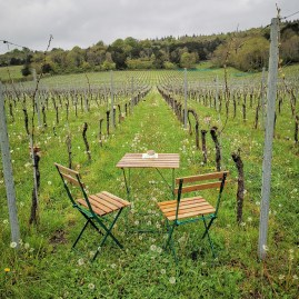 Albury Vineyard best of British organic Blanc de blanc and Roses