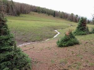 A small stream running through an open meadow.