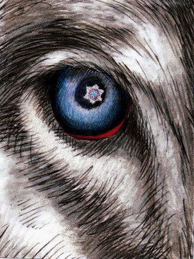 wolf eye color special effect for daffy film