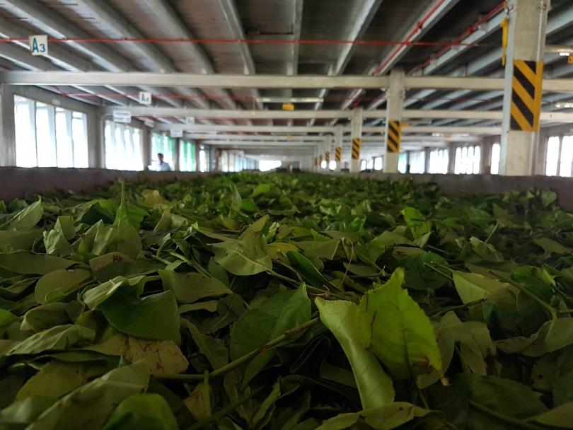 usine de thé au Sri Lanka