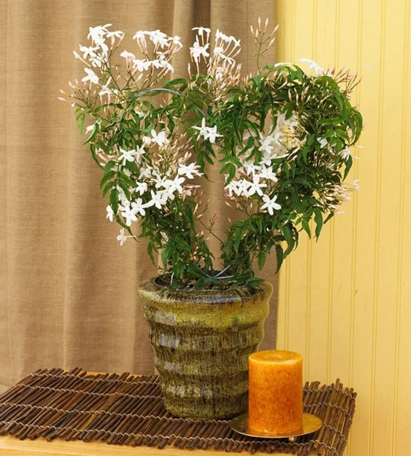 13 pflegeleichte blhende Zimmerpflanzen