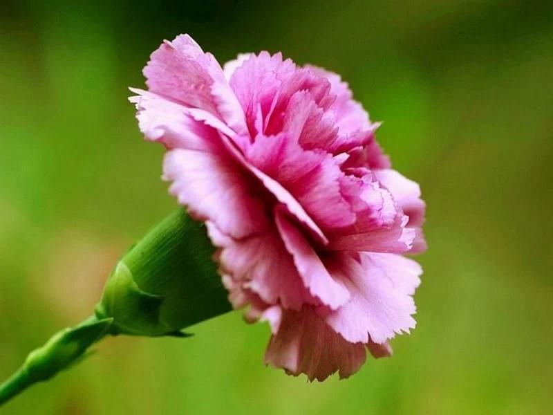 Vielfalt an Blumenarten  Deko  Feiern Hochzeit