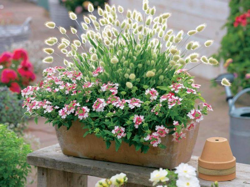 18 pflegeleichte Gestaltungsideen mit Grser Pflanzen