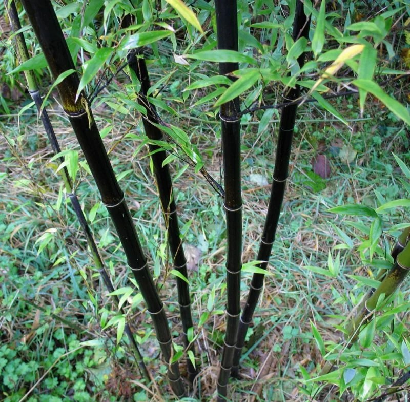 Gartengestaltung Balkon Bambus Im Kubel