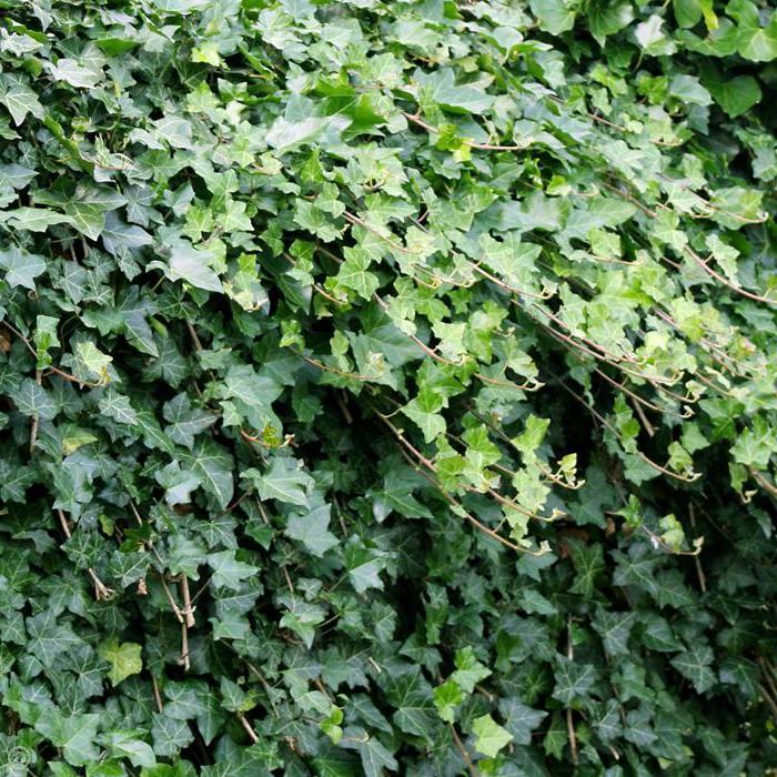 Gartenstrucher 13 bezaubernde Arten und Pflegehinweise  Garten Gartenarbeit  ZENIDEEN