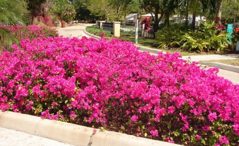 Mediterrane Pflanzen Fur Den Garten – Siddhimind Info