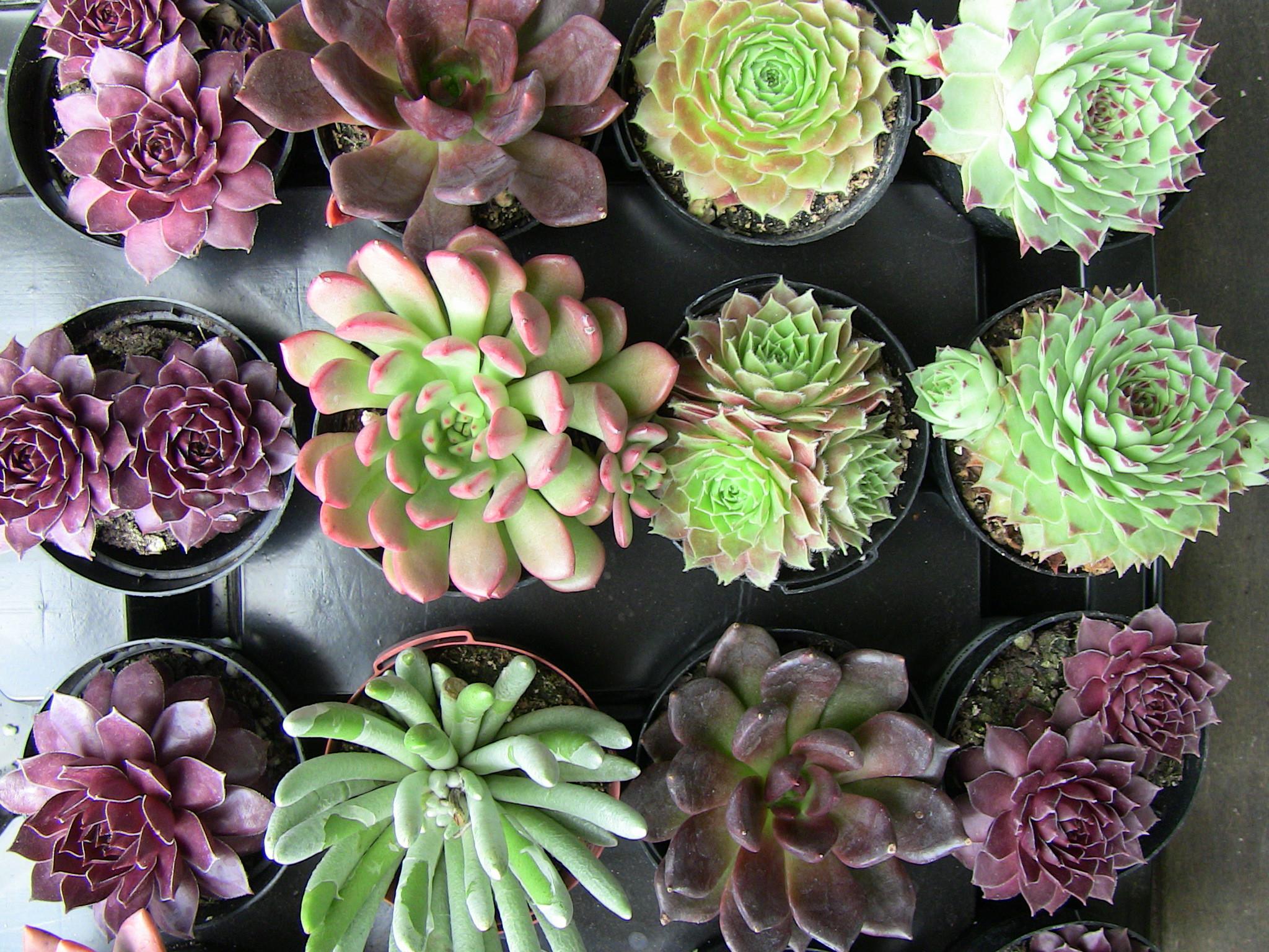 Mediterrane Pflanzen fr den Garten  Garten Haus