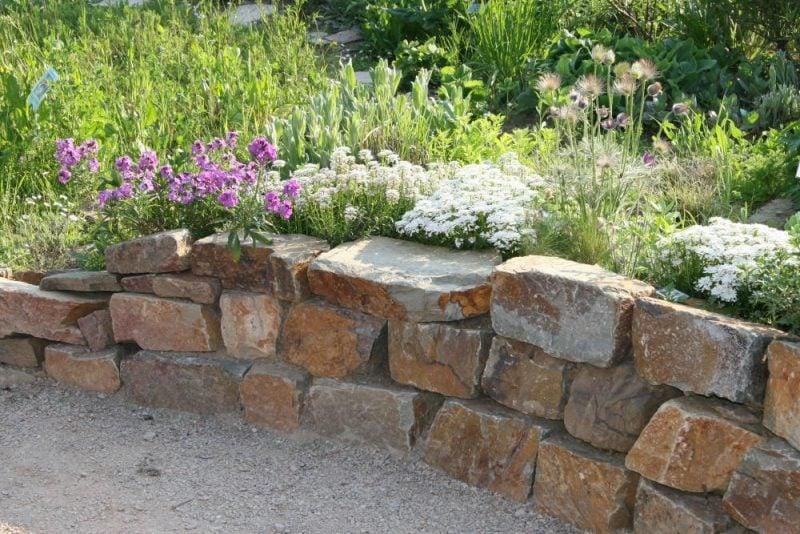 Pflanzen fr Steingarten7 pflegeleichte Vorschlge  Garten Gartenarbeit  ZENIDEEN