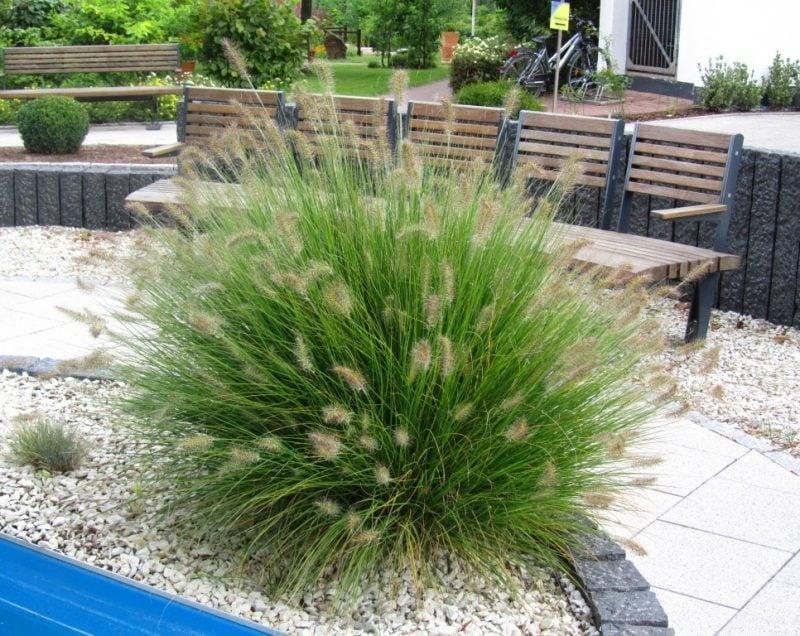 Pflanzen fr Steingarten7 pflegeleichte Vorschlge