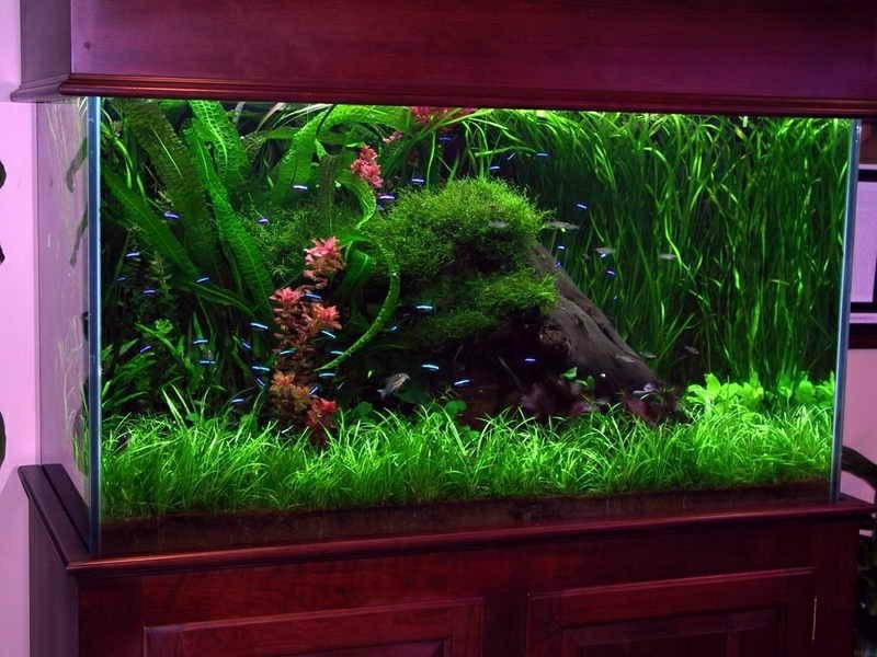 Aquarium Dekorieren Ideen Gartendeko Aus Beton Anleitung Und 33 Kreative Ideen