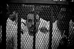 Hossam el-Hamalawy, The Mahalla Prisoners