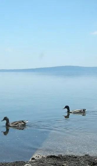 Antonello Tanteri, Trevignano - lake postcard