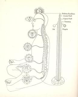 chakra e nadi nel corpo sottile