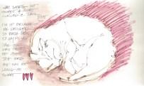 W14 4 11 JAI SLEEPING 1 copy