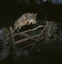 Veolia Wildlife Photo 2009