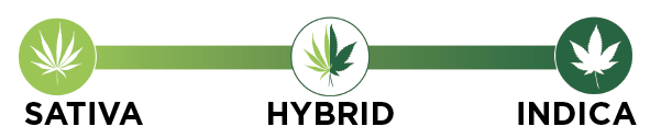 Number line explaining that Hybrids are a combination of Sativa and Indica strains.