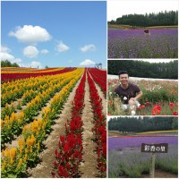 "Japan Road Trip 2014 Summer: ""F"" For Flower & Furano"