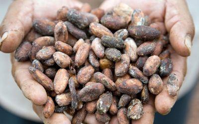 Kakao-Zeremonie: Wirkungen und Ursprung des Kakaos