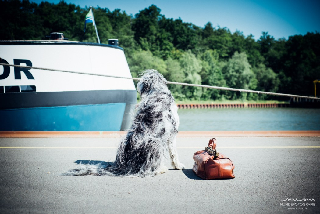 Hund auf Reisen – suisui Hundefotografie