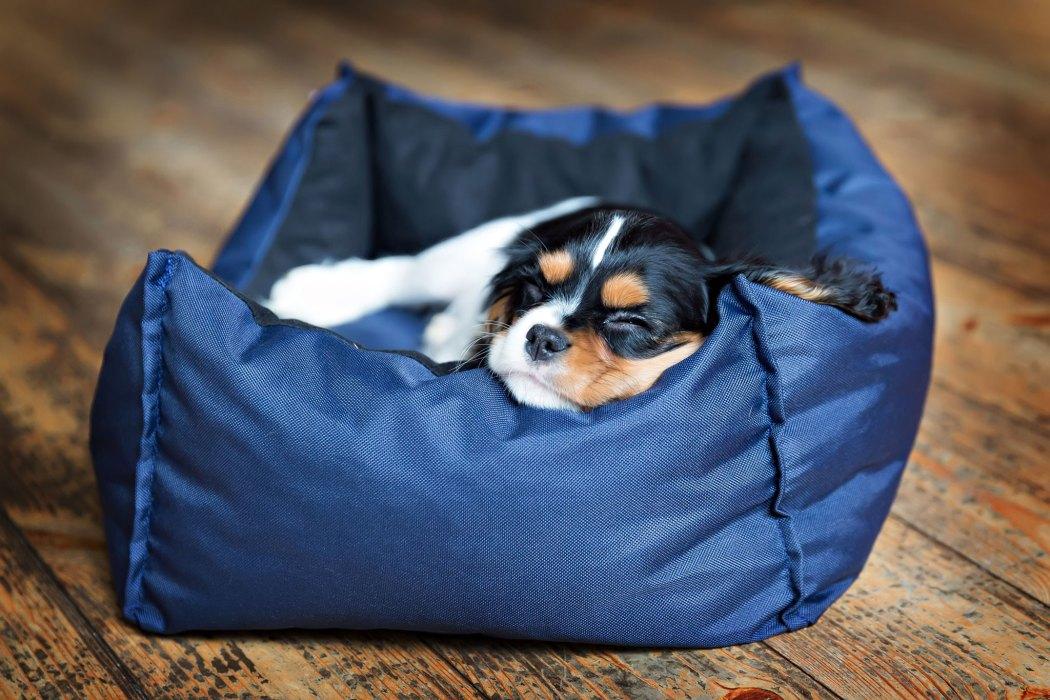 Tipps zur Eingewöhnung von Hundewelpen