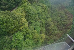 View of the forest below us