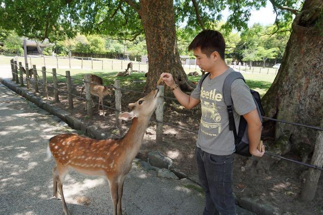 My friend feeding a deer in Nara Park
