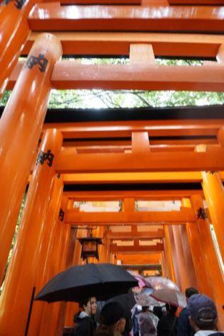 Walking through the torii gates in Fushimi Inari-Taishi