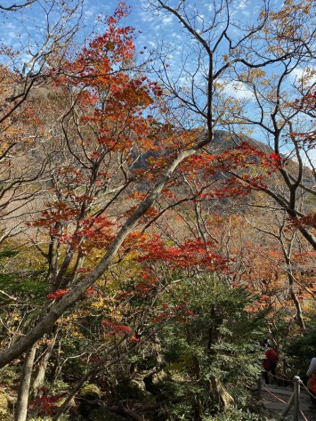 We reached the forested part of Yeongsil Trail