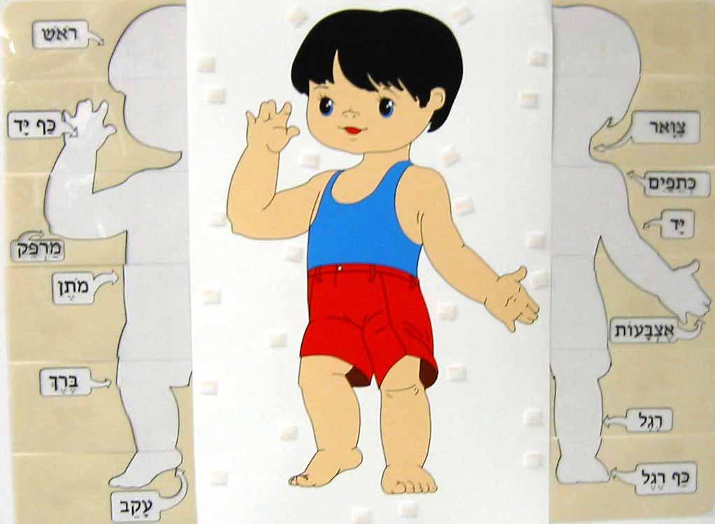 Poster Interactive Body Parts Zerachs New Website