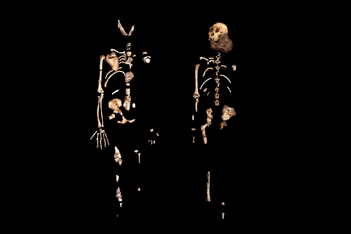 Le mystère de l'origine humaine.