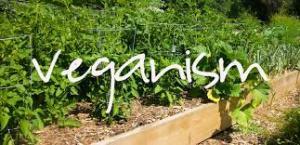 zero waste vegan
