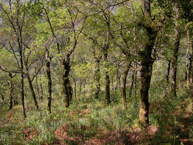 Contributos ZERO – Consulta Pública – Reforma das Florestas