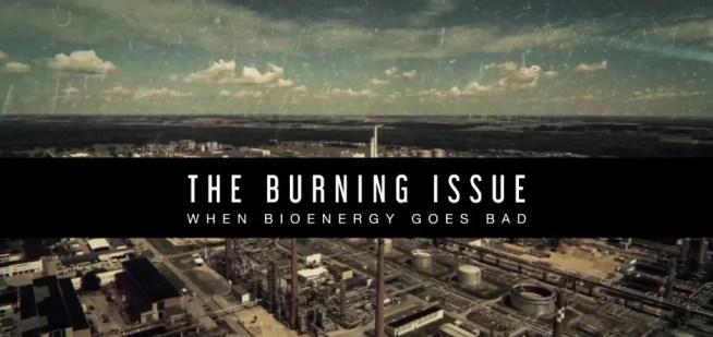 The Burning Issue – When bioenergy goes bad | 21 de Junho