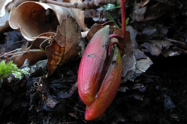 Associados e associadas da ZERO plantam 1.000 sobreiros na Mata Nacional de Leiria