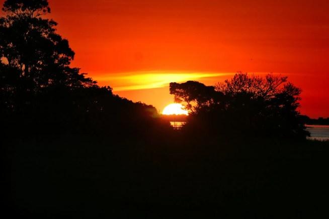 Preservação da floresta Amazónica e política climática – ZERO envia carta ao Embaixador do Brasil em Portugal