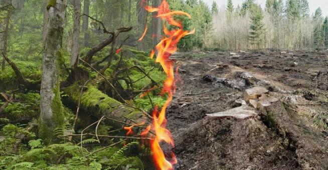 A UE deve proteger as florestas, e não queimá-las para produzir energia.