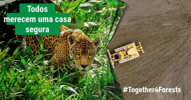 #JuntosPelasFlorestas  #Together4Forests