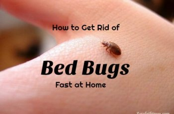 How to Get Rid of Bed Bugs Fast - 8 Home Remedies That Work