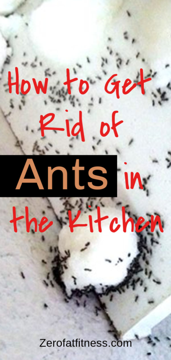 How to Get Rid of Ants Fast and Naturally: 9 Best Home Remedies