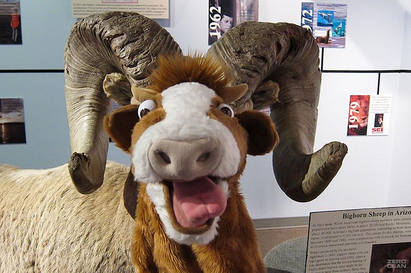 moolander-bighorn-sheep-horns-zero-dean