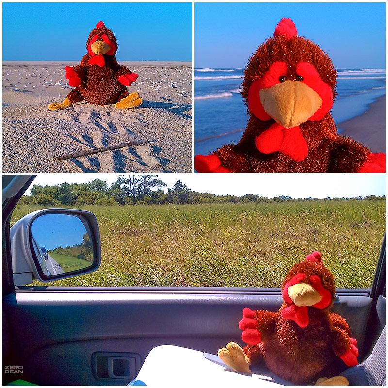plucky-at-the-beach-and-watching-me-drive-zero-dean